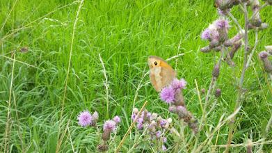 Photo: Bildhübscher Schmetterling am Ruhrhöhenweg Süd.