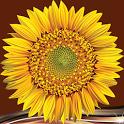 Sunflower Photo Collage icon