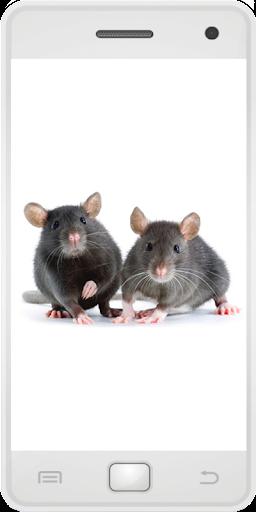 娛樂必備免費app推薦|マウス線上免付費app下載|3C達人阿輝的APP