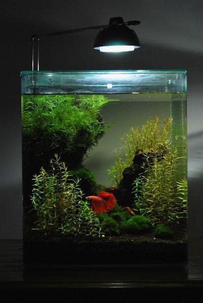 Aquarium Design Ideas- screenshot