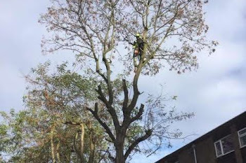 tree climbing service in worcestershire