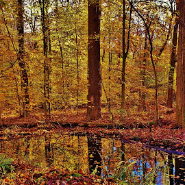 Autumn Forest At Patuxent 2018 by Matthew Beziat - Landscapes Forests ( patuxent research refuge north tract, anne arundel county, fall, maryland, autumn, patuxent research refuge,  )