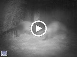 Video: Edgartown Great Pond - Kanomika midnight - late August
