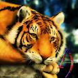 Silent Beast Xperien Theme icon
