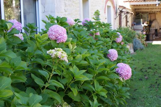 gites-le-nid-le-relais-les-grandes-chaumes-17700-surgeres-jardin-ete-2014-10jpg