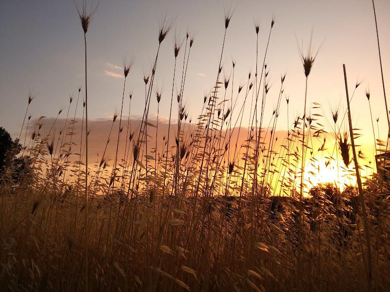 il solito tramonto... di francescaCor