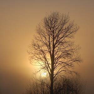 Foggy Sunrise16X20.jpg