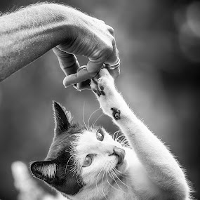 Cat for a snack by Tom Mehlum - Black & White Animals ( cats, cat, animals, black and white, snacks )