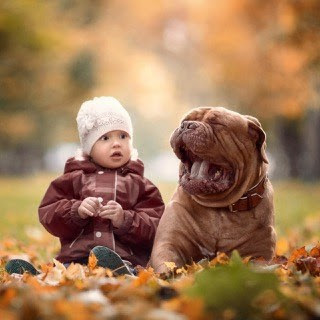 For Dog Lovers 11