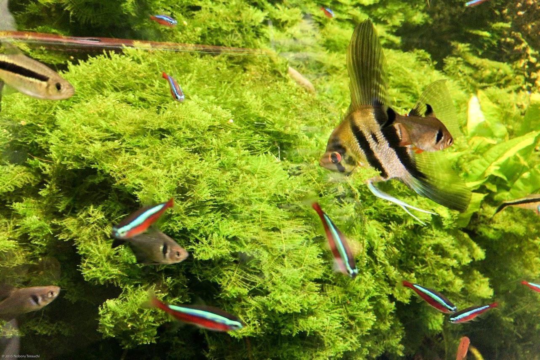 色鮮やかな熱帯魚