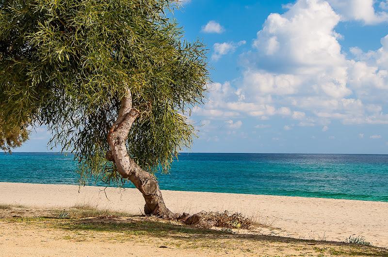 in riva al mar di domenicolobinaphoto