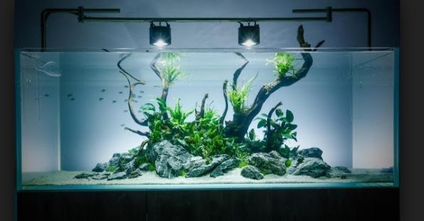 Best Aquascaping Designs Apps Bei Google Play