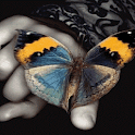 Multicolor Butterfly LWP icon