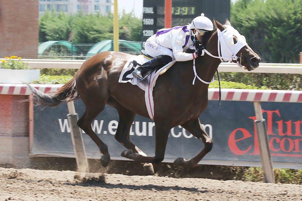 Enterita (Dangerous Midge) se queda con la victoria en Handicap (1200m-Arena-HCH). - Staff ElTurf.com