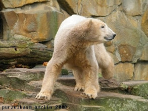 Photo: Knut ist auf Anlageninspektion ;-)