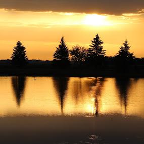 On Golden Pond by Rose McAllister - Landscapes Sunsets & Sunrises ( water, nature, sunrise, landscape, pond, golden,  )