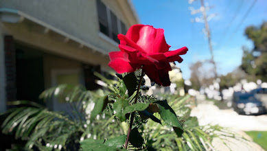 Photo: Ufocus pulled to the flower. Notice some of the plants in the background are mistakenly pulled into focus.