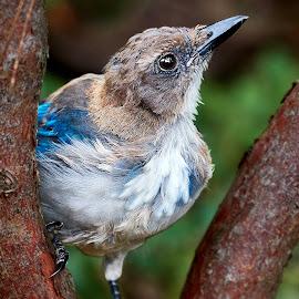 0 Bird 98506~ 1Q by Raphael RaCcoon - Animals Birds