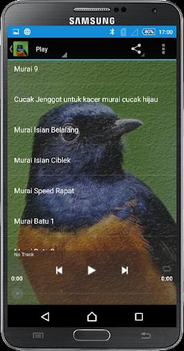免費下載生產應用APP|Kicau Master Murai app開箱文|APP開箱王