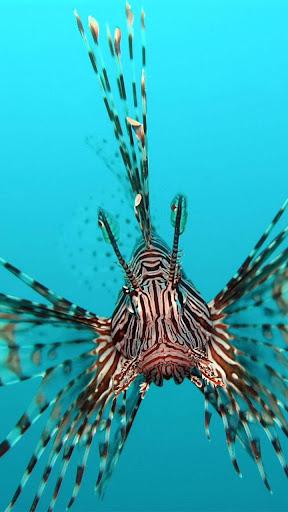 海洋鱼类 動態桌布
