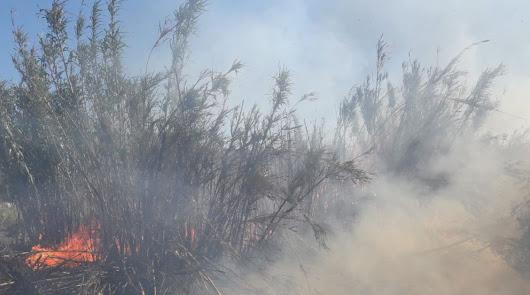 Controlado el incendio forestal en Serón tras la rápida actuación del Infoca