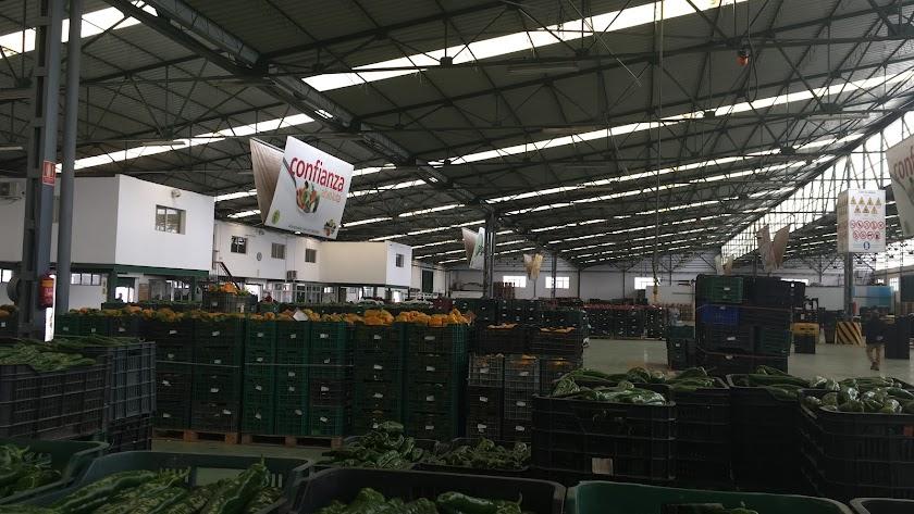 Imagen de archivo de productos hortofrutícolas en Agrupaejido de La Redonda.