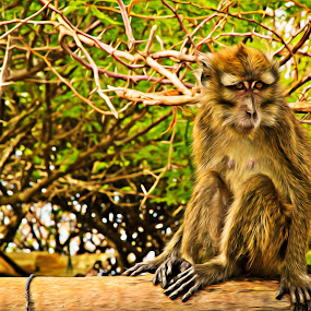 Monkey Business by Bong Flores - Animals Other Mammals ( primate, monkey, mammal )