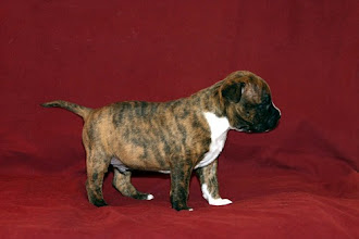 Photo: Mia Albachiara Aaron Abbronzato (M) 