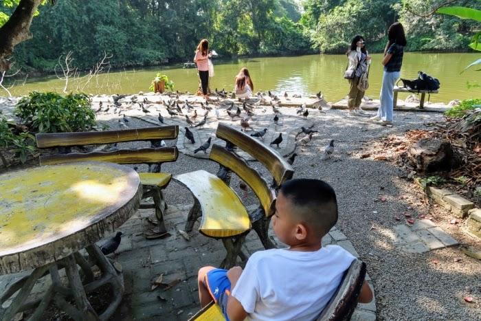Wat Umong pigeons