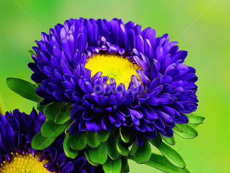 by Dipali S - Digital Art Things ( nature, blue, digital art, digital manipulation, flower )