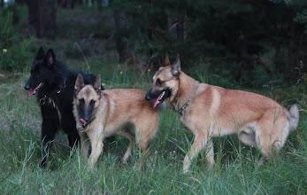 Photo: D'AMICO Polaris, BILLIE JEAN Polaris, DIR EN GREY Polaris