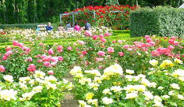 Photo: Christchurch Garden