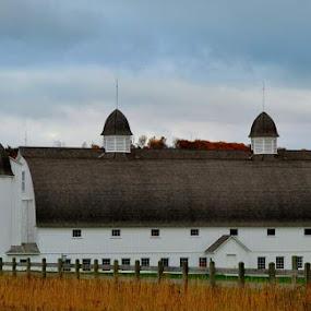 DH Day Barn by Mandy Schram - Buildings & Architecture Public & Historical ( #oldbarns, #fallinnorthernmichigan, #historicalbarn, #michigan, #lovemystate )