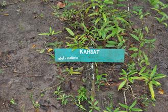 Photo: erba contro la malaria