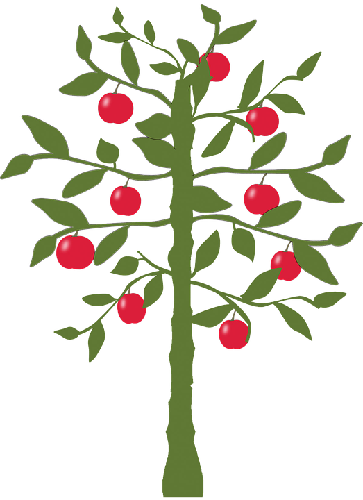 Apple Tree, Tree, Apple,
