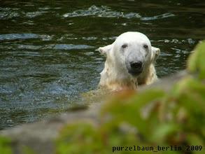 Photo: Henkelohren-Knut :-)