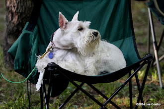 Photo: Gretchen loves camping, but is sniffing toward the grill.