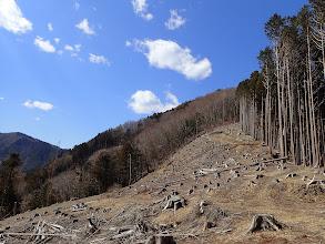 伐採地を振り返る