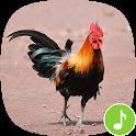 Appp.io - Rooster Sound Ringtones icon