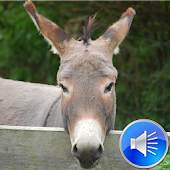 Donkey Sounds Ringtones