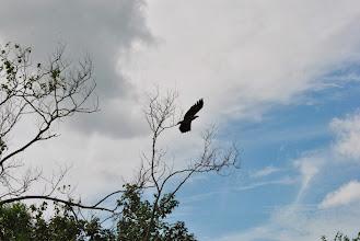 Photo: l'aquila spicca il volo
