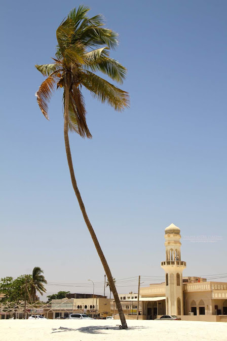 Explorando Salalah, a capital da região de Dhofar | Omã