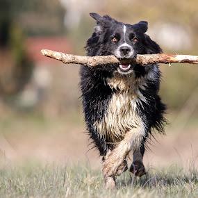 running by Mathias Ahrens - Animals - Dogs Running ( pwcmovinganimals-dq )