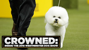 Crowned: Inside the 2018 Westminster Dog Show thumbnail