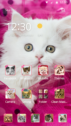 Pink Persian white Cat theme Screenshot
