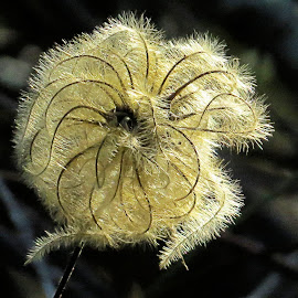 by Mike Dinkens - Nature Up Close Other plants (  )