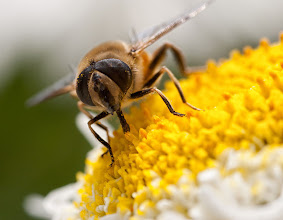 Fotó: Méh