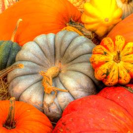 Fall Pumpkins by Randall Griffin - Nature Up Close Gardens & Produce ( orange, pumpkin, green, fall, gray )