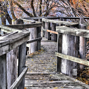 Wooden walkaway by Don Mann - City,  Street & Park  City Parks ( walking, photograph, photographs, don, colorful, sanctuary, pictures, vibrant, north, pretty, digital, hiking, photography, boardwalk, southern, nature, trail, digital art, dark, path, photographer, east, nature trail, bridges, bc, light, british columbia, canada, pathway, beautiful, image, photo, northern, photos, picture, color, peachland, canadian, south, images, okanagan valley, bridge, mann, walk, natural, west, hike, hdr, landscape,  )