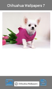 Train a Chihuahua screenshot 6